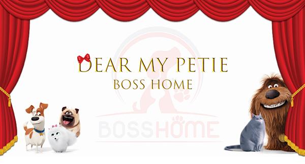 Offline Pet – Dear My Pettie Boss Home: sân chơi cuối tuần cho bạn trẻ Vũng Tàu.