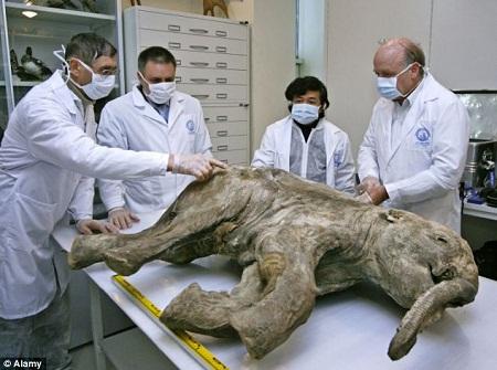 Hóa thạch voi ma mút 42.000 năm tuổi hoàn hảo nhất thế giới