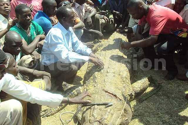 Ngư dân giết cá sấu khổng lồ để trả thù cho vợ