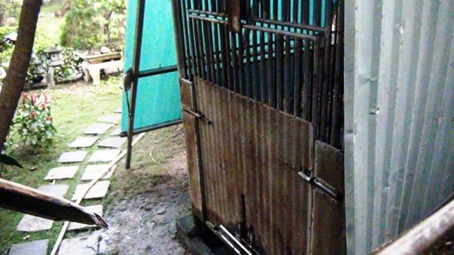 Con gấu nặng 100 kg cắn đứt cánh tay bé 3 tuổi ở Sài Gòn