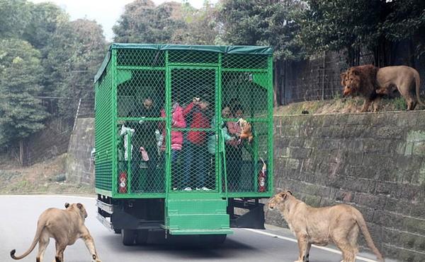 Sở thú ngược đời nhốt người vào chuồng thay vì nhốt động vật