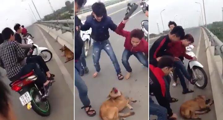 Clip nhóm thanh niên đánh chết con chó trên cầu khiến dân mạng phẫn nộ