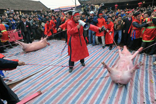 Dân Ném Thượng sẽ chém lợn ở sân đình
