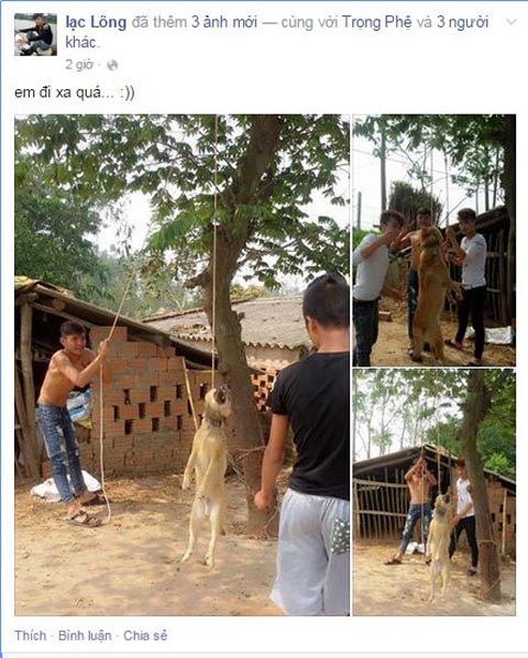Phẫn nộ 3 thanh niên treo cổ chú chó lên cây, chụp ảnh