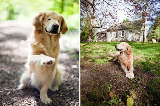 Chú chó mù đáng yêu làm bạn với trẻ tự kỷ