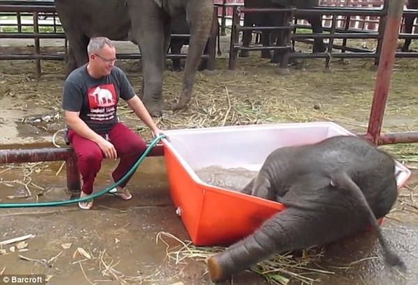 Clip voi con đi tắm khiến hàng triệu người dùng mạng cười nghiêng ngả