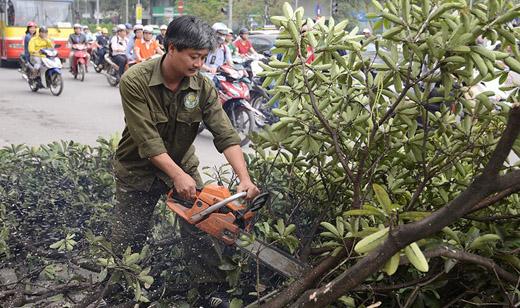 Hà Nội tạm dừng chặt hạ hàng nghìn cây xanh