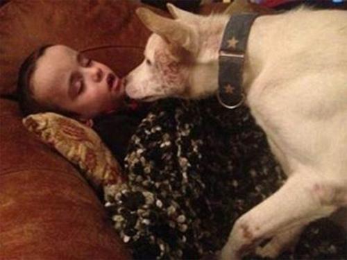 Tình bạn cảm động của chú chó suýt làm mồi nhậu và cậu bé tự kỷ