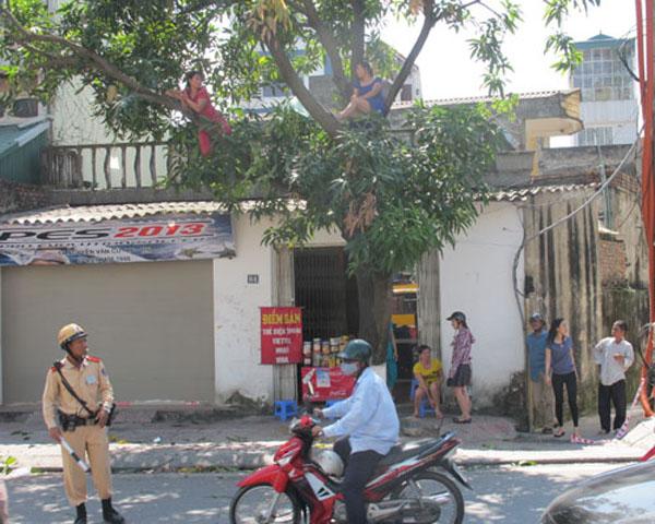 """Gặp người phụ nữ từng """"cố thủ"""" trên cây phản đối chặt hạ"""