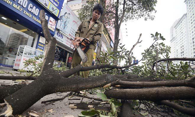 Đình chỉ 3 cán bộ liên quan vụ chặt cây tại Hà Nội