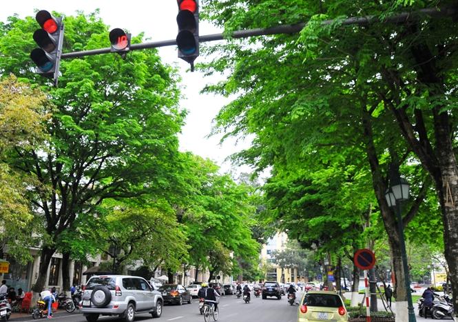Chuyên gia Lâm nghiệp hiến kế trồng cây xanh đô thị ở Hà Nội