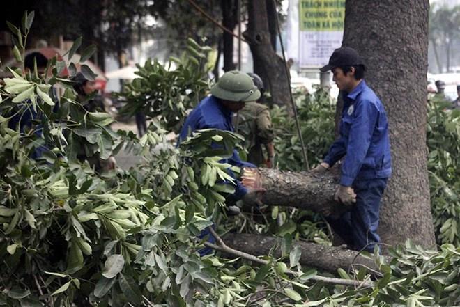 Phó Thủ tướng: Sớm kết luận, xử lý trách nhiệm vụ chặt cây ở Hà Nội