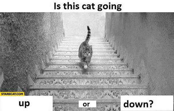 """Lại thêm bức ảnh khiến dân tình """"phát điên"""" vì tranh cãi: Con mèo đang đi lên hay đi xuống?"""