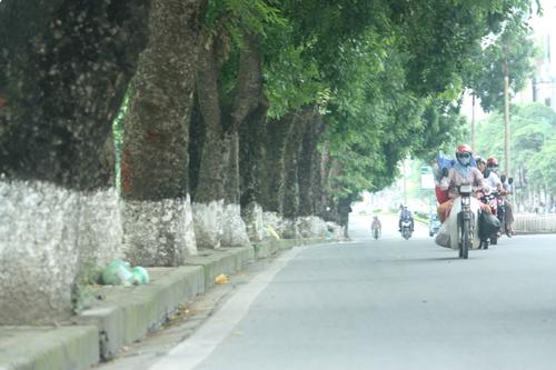 Hà Nội chi 60 tỷ cho kế hoạch cắt tỉa cây trong 3 năm