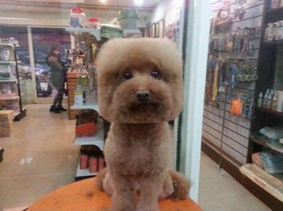 Ngộ nghĩnh với trào lưu... chó mặt vuông, đầu tròn xuất hiện ở Đài Loan