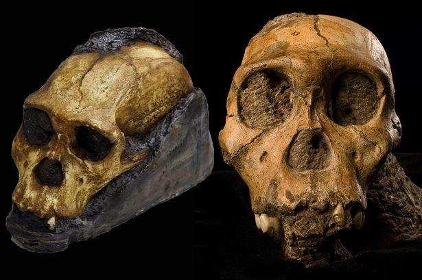 Phát hiện mô da hóa thạch của tổ tiên loài người