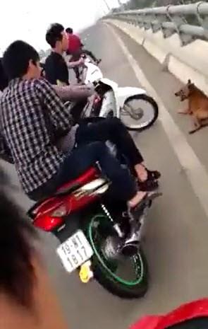 Triệu tập nhóm thanh niên hành hạ chó đến chết trên cầu gây chấn động dư luận