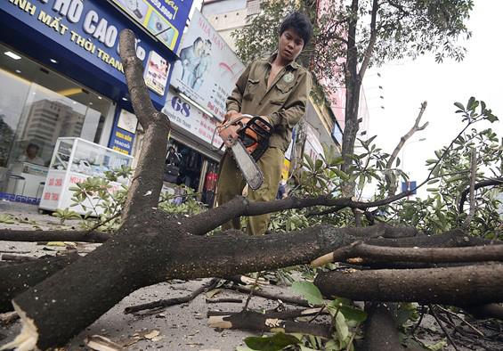 Kiến nghị kiểm điểm lãnh đạo Hà Nội về vụ chặt cây