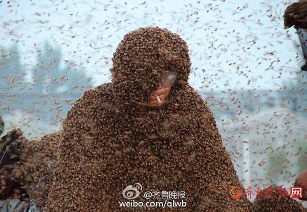 Cho hơn 1 tạ ong phủ kín người để lập kỷ lục thế giới