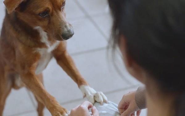 Video chú chó ngồi chờ chủ ngoài bệnh viện lay động hàng triệu trái tim