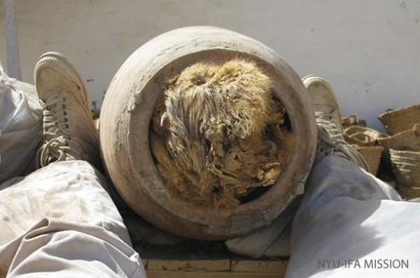 Tìm thấy 8 triệu xác ướp chó ở hầm mộ Ai Cập