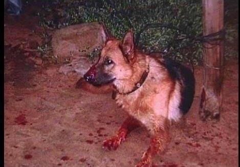 Suy ngẫm: Bài học từ cái chết của chú chó miệng đầy máu