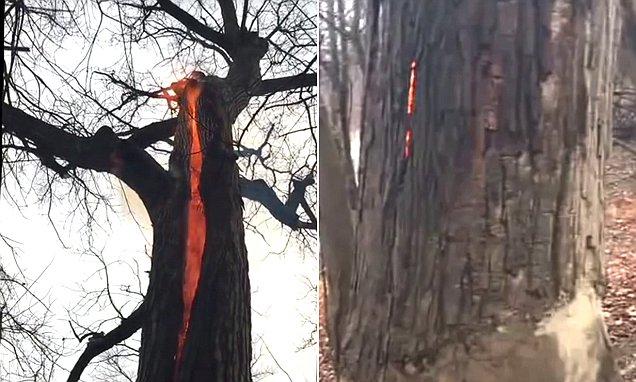 Kỳ lạ hiện tượng cây cháy từ bên trong mà không có khói