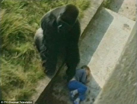 Câu chuyện cảm động khiến cả thế giới phải nhìn nhận lại về loài khỉ