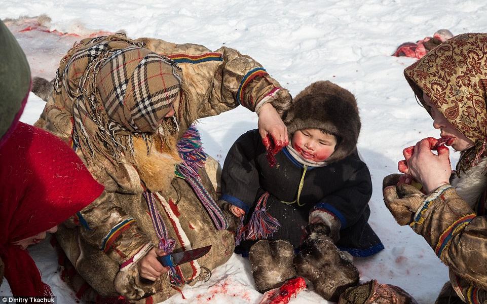 Chùm ảnh tuyệt đẹp về bộ tộc chuyên ăn thịt sống, uống máu tuần lộc