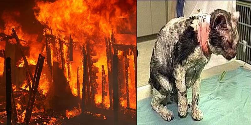 Ngỡ ngàng khi biết vì sao cô mèo này 5 lần xông vào biển lửa