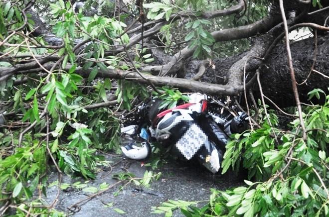 Giải cứu người đàn ông bị cây cổ thụ đè trên phố Sài Gòn
