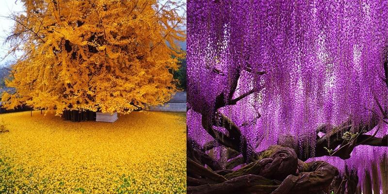 Choáng ngợp trước 20 loại cây trăm, ngàn tuổi đẹp nhất hành tinh