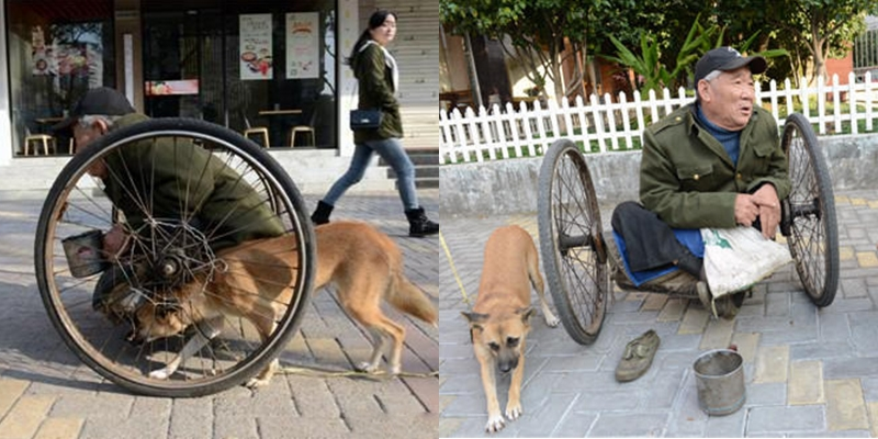 """Xúc động với chú chó hàng ngày """"đẩy"""" xe cho chủ bại liệt đi kiếm tiền"""