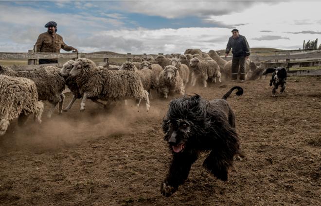 """Cuộc sống chăn cừu ở nơi """"tận cùng"""" của thế giới"""