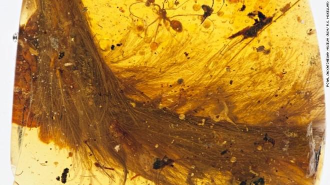 Phát hiện đuôi khủng long 99 triệu năm trong hổ phách