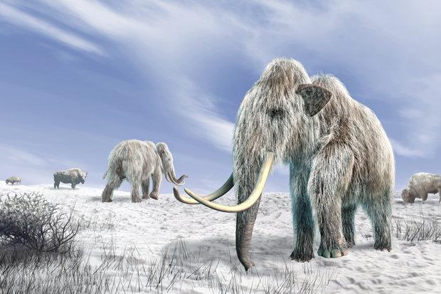 """Phát hiện """"của quý"""" voi ma mút 700.000 năm tuổi ở Anh?"""