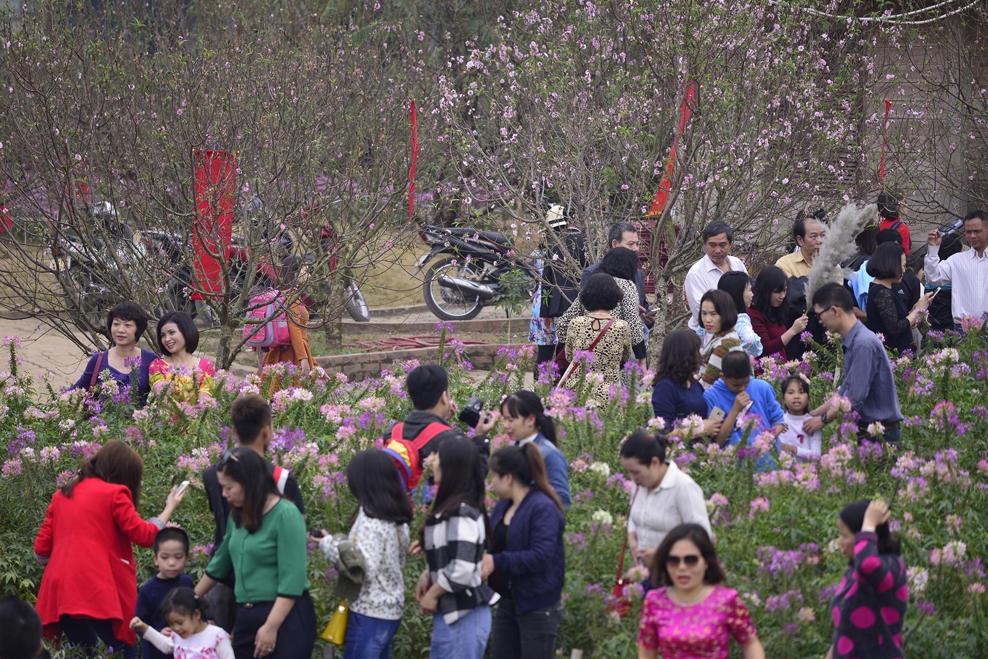 Vườn đào Nhật Tân đông đúc du khách ngày nghỉ lễ