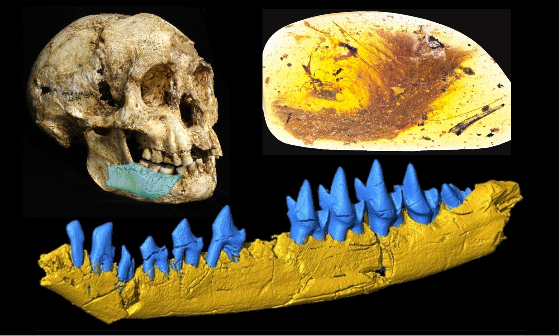 Người lùn, khủng long và những phát hiện hóa thạch lý thú