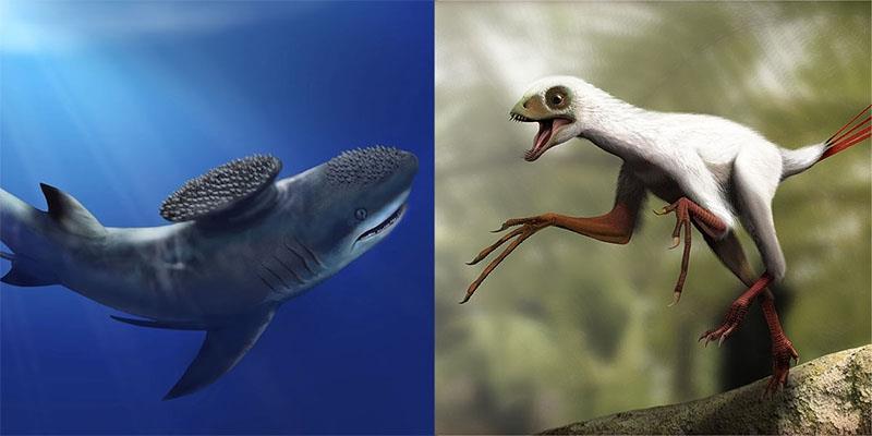 Những sinh vật có hình thù kì dị nhất thời tiền sử