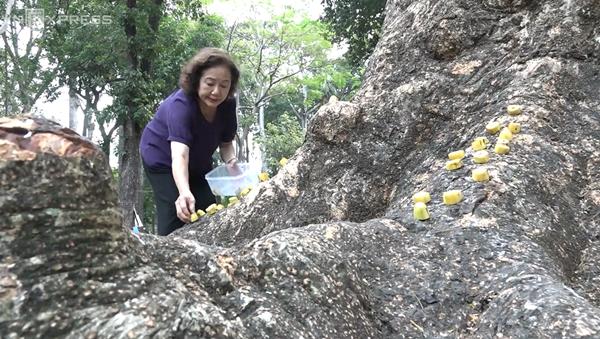 """Câu chuyện đẹp về """"bà tiên"""" xuất hiện mỗi sáng ở công viên Tao Đàn"""