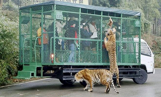 Công viên động vật hoang dã đầu tiên ở phố biển Quy Nhơn