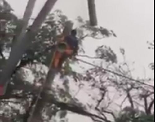 Điện lực thông tin về người bị bỏng nặng khi trèo cột điện
