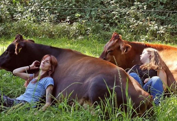 Thư giãn độc lạ bằng cách... ôm ấp bò
