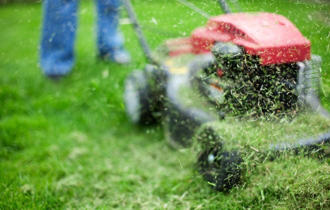Công nghệ biến cỏ thành nhiên liệu sinh học