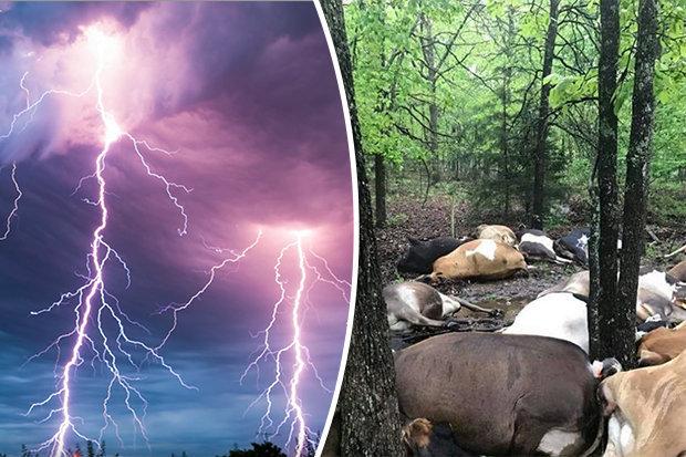 Người ngoài hành tinh tàn sát hàng loạt 32 con bò?