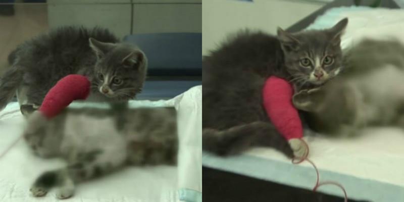 Thắt tim khi chú mèo con canh mẹ chết đêm ngày vì nghĩ mẹ còn ngủ