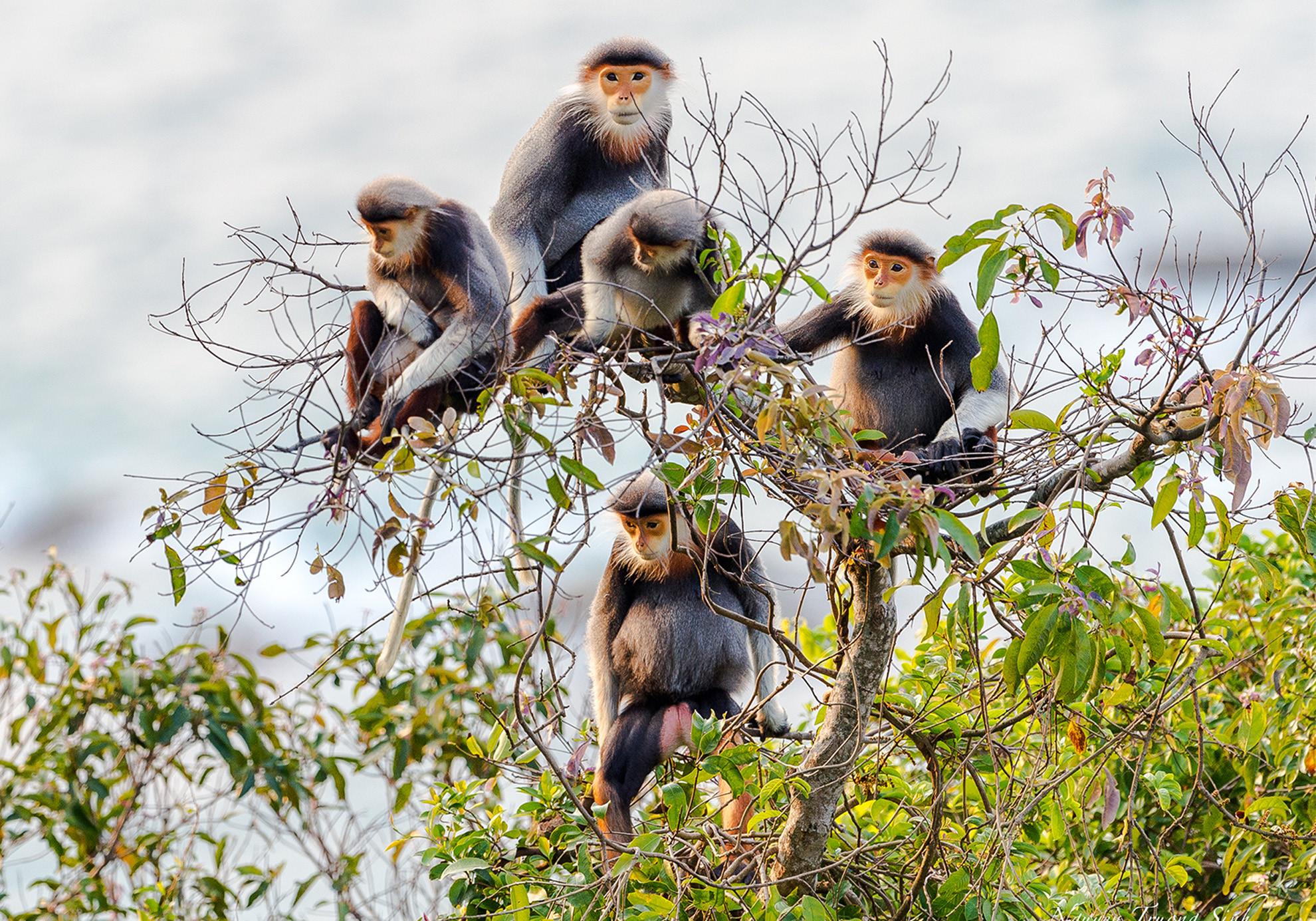 Báu vật thiên nhiên ở bán đảo Sơn Trà