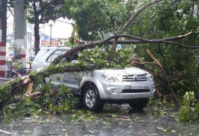 Sài Gòn mưa ngập, kẹt xe, cây xanh bật gốc đè ôtô