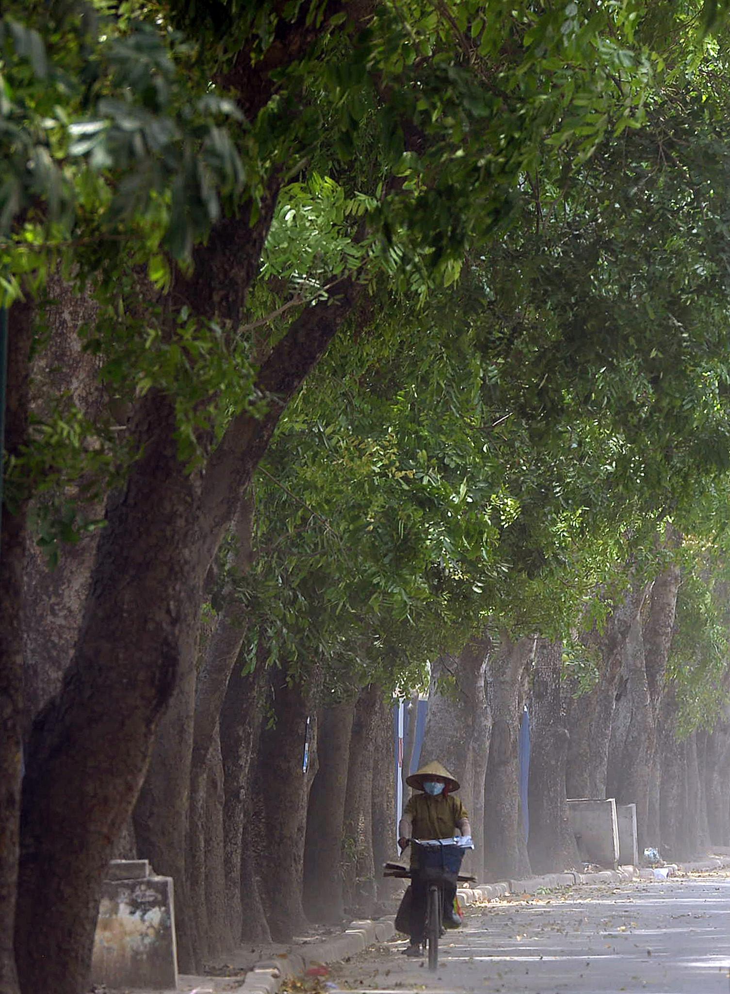 Tại sao không xin ý kiến người dân khi chặt hạ cả nghìn cây xanh?