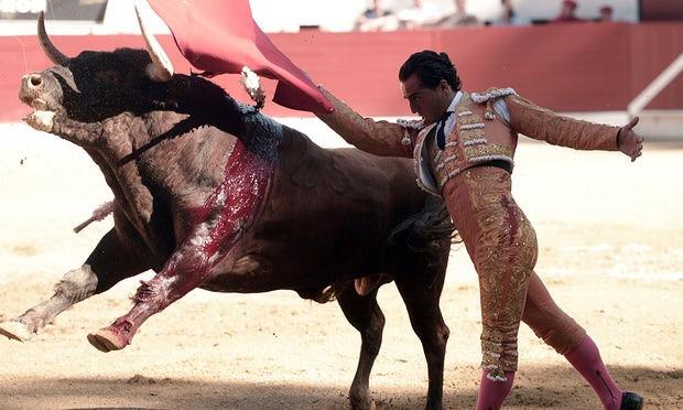 Đấu sĩ Tây Ban Nha bị bò tót húc chết giữa màn biểu diễn